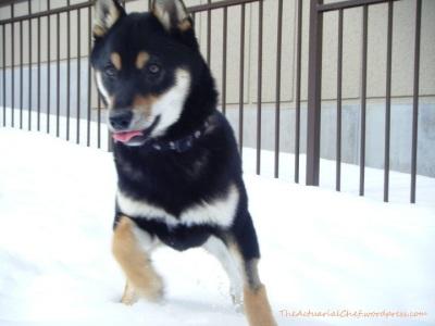 Yoshi in the snow